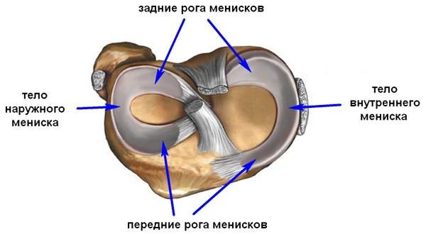 Разрыв переднего рога медиального мениска коленного сустава суставы 24 инструкция